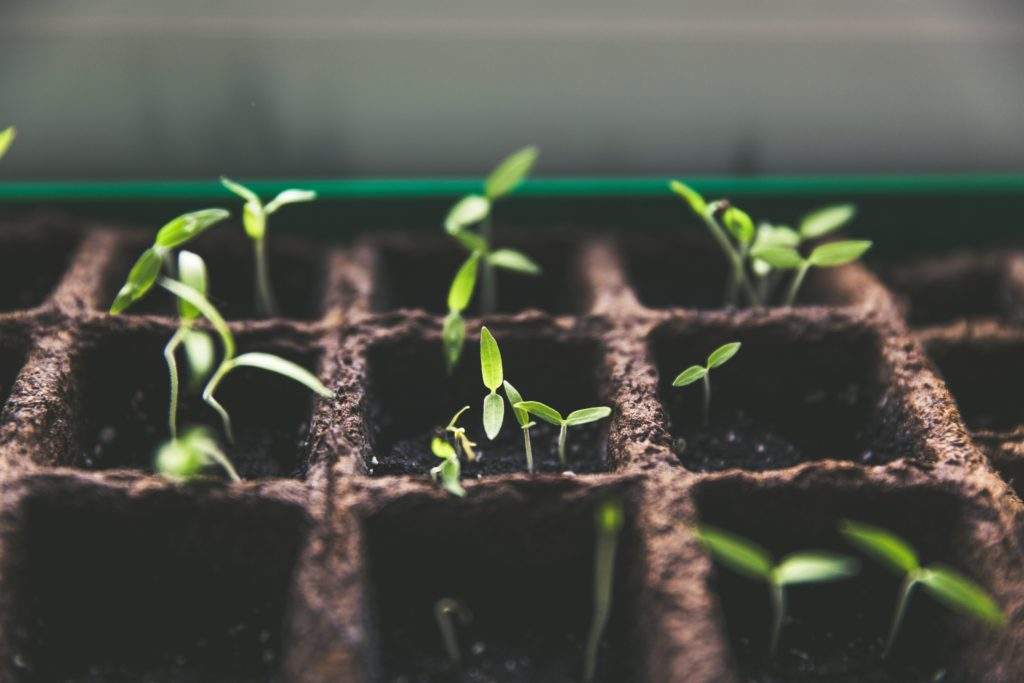 Resilient seeds – Nurturing the future of agriculture